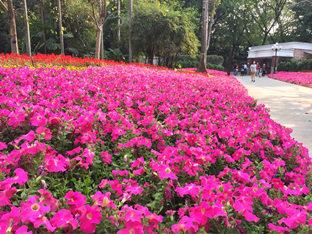 四月每朵花,都向着太阳露出笑脸—荔枝公园-咚咚地产头条