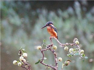 公园里拍鸟-咚咚地产头条