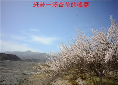 赶赴一场杏花的盛宴(从南疆到北疆)