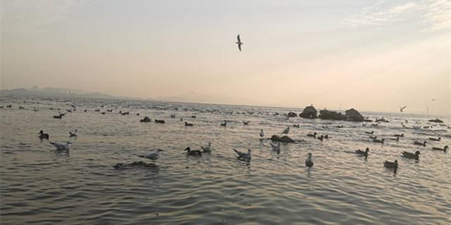 深圳湾看鸭子