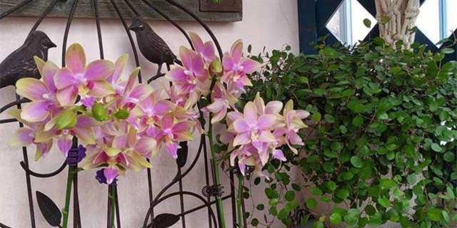 怀念春天的花